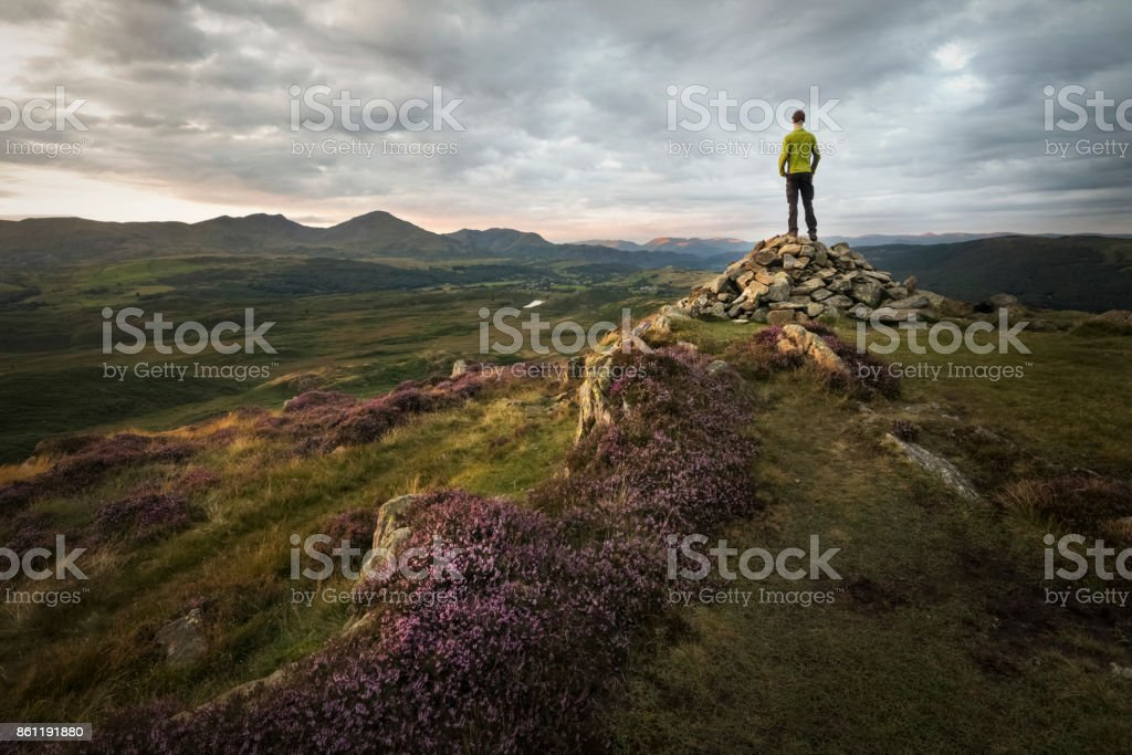 Strong hiker overlooking the beautiful mountains of the lake district at sunset with sunlight lit purple heathland royalty-free stock photo