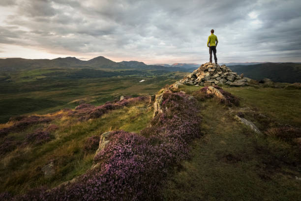 Strong hiker overlooking the beautiful mountains of the lake district at sunset with sunlight lit purple heathland Beautiful view of the English Lake District cumbria stock pictures, royalty-free photos & images
