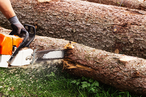 istock Strong man is cutting a tree with a chainsaw 1146771945