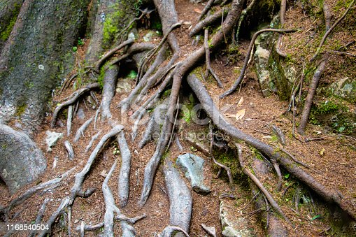 175407085istockphoto strong roots 1168540504