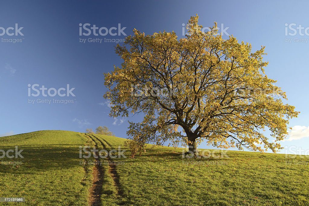 Strong, Single on Open, Green Meadow under Blue Sky royalty-free stock photo