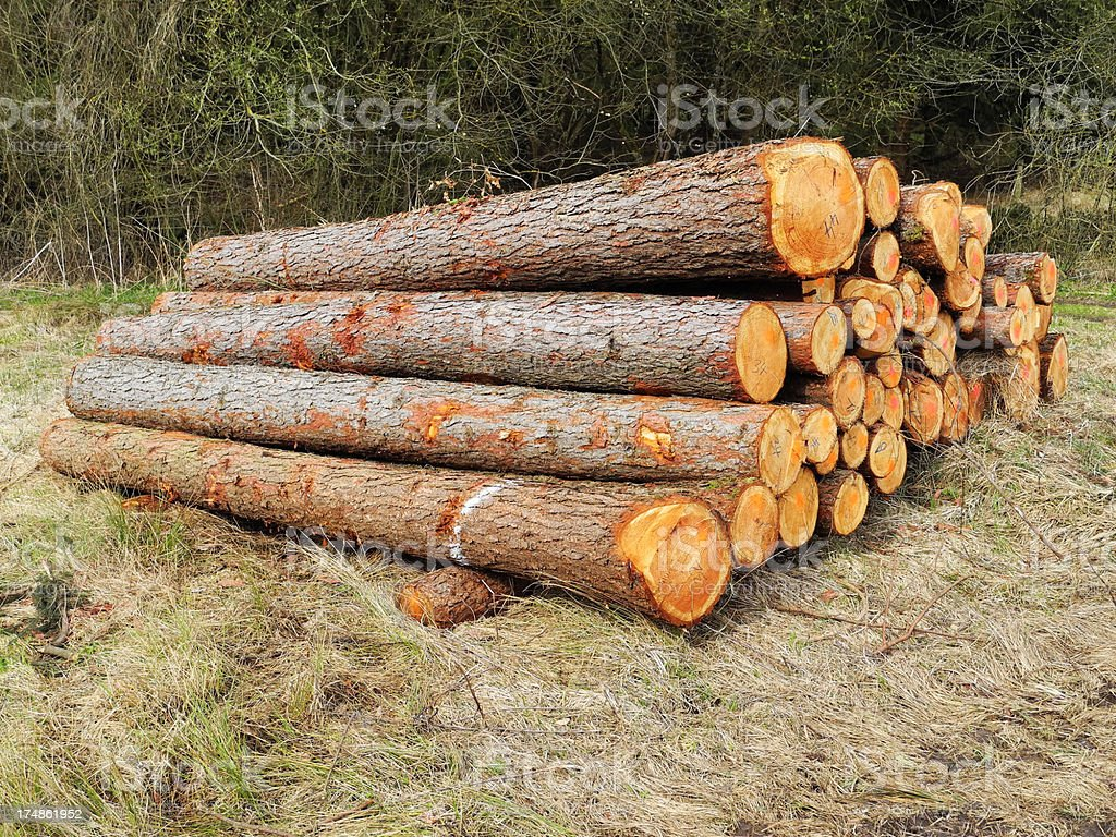 Strong trees stock photo