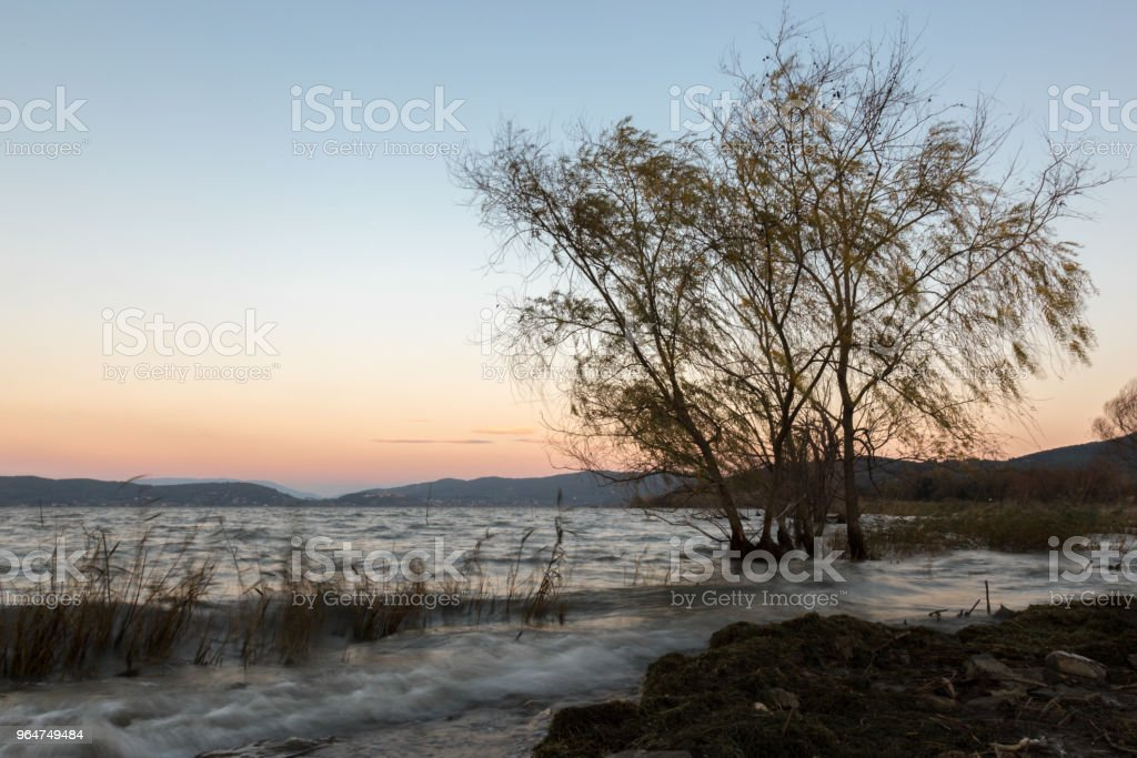 Strong wind at the lake, with blurred trees motion and waves on royalty-free stock photo
