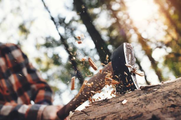 Starke Holzfäller schneidet Baum im Wald, hölzerne Späne fliegen auseinander. Der Hintergrund jedoch unscharf – Foto