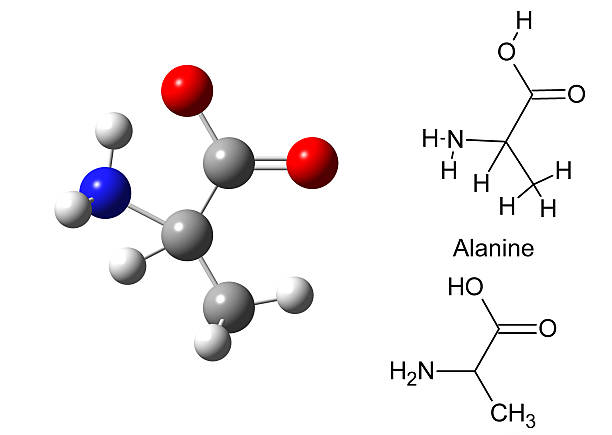 structural model of alanine molecule - cyclic stock pictures, royalty-free photos & images
