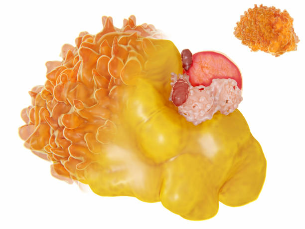 structure of a fat cell - metabolic syndrome stock photos and pictures