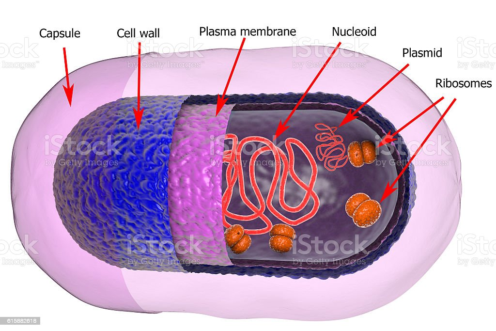 Structure of bacterial cell stock photo
