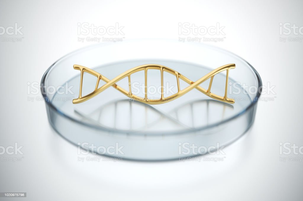 Structure of DNA in a Petri dish stock photo