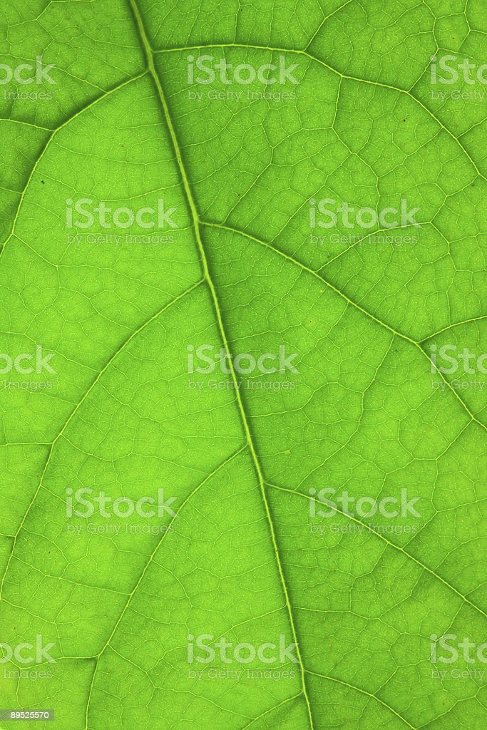 structure of green leaf royalty-free stock photo