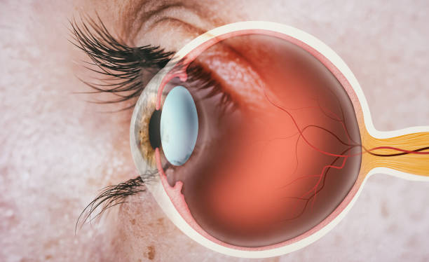 Structure of human eye. stock photo