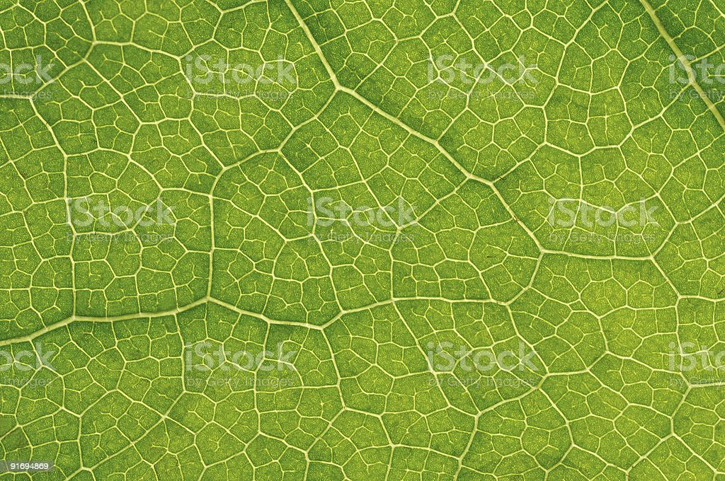structure of leaf natural background stock photo