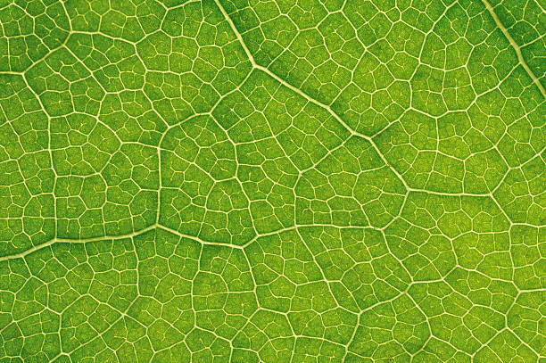 structure of leaf natural background - magnification stock pictures, royalty-free photos & images