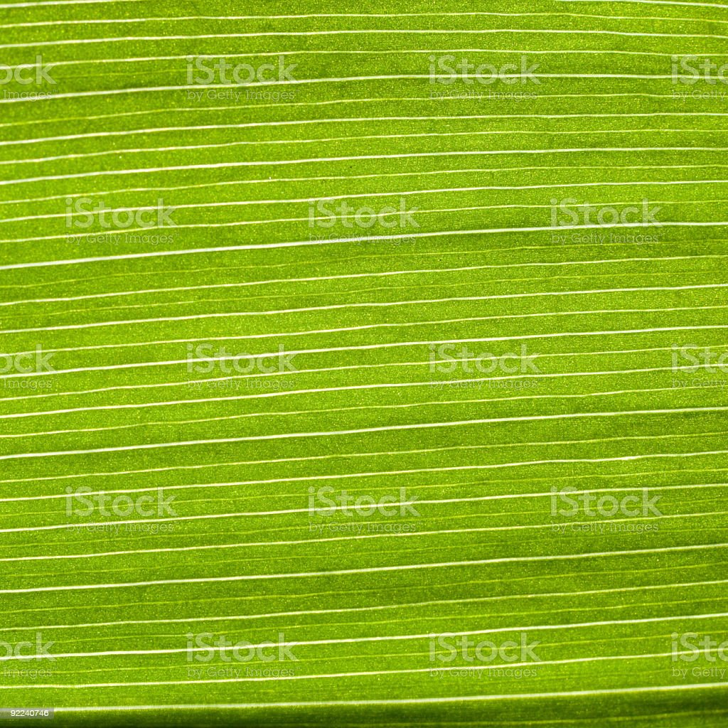 structure of leaf natural background royalty-free stock photo