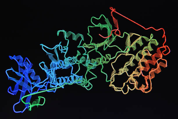 Structure of the protein molecule. stock photo