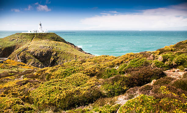 Strumble Head lighthouse The lighthouse at Strumble Head in the Pembrokeshire Coast National Park, Wales, with gorse in the foregorund. south wales stock pictures, royalty-free photos & images