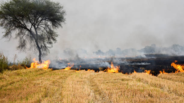 Stubble burning Stubble burning: setting of fire in the field intentionally after crop harvesting. environmental damage stock pictures, royalty-free photos & images