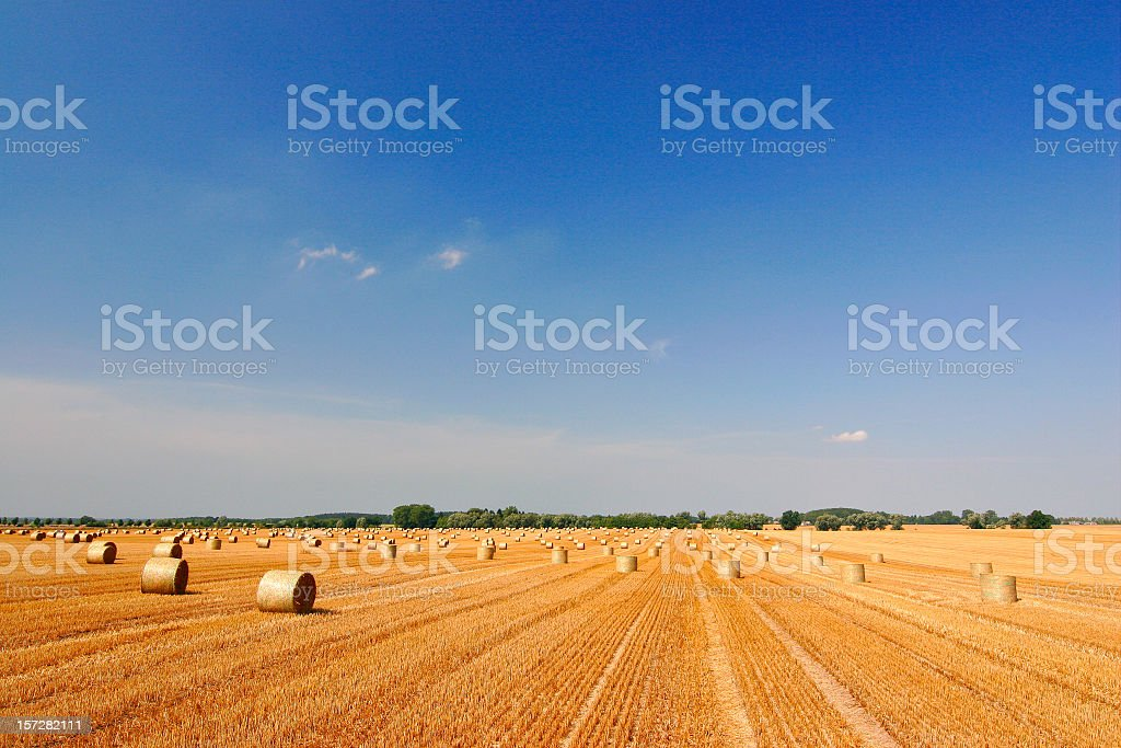 Stubble Field full of Hay Bales royalty-free stock photo