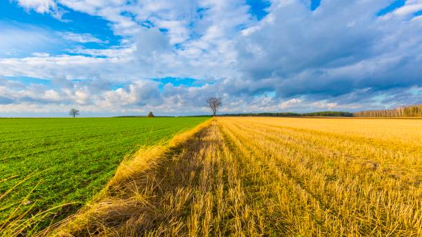 stubble field landscape under cloudy sky - green screen background stock photos and pictures