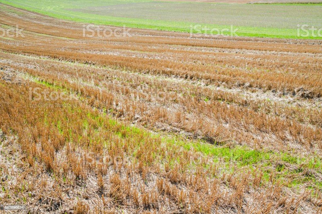 Stoppelbart field Lizenzfreies stock-foto