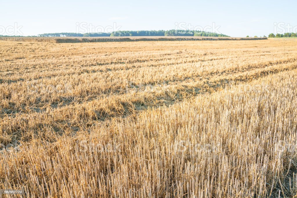 Stubble field royalty-free stock photo
