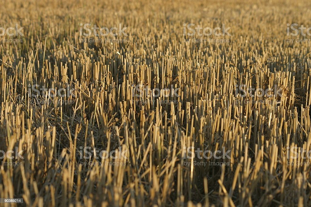 Stubble field stock photo