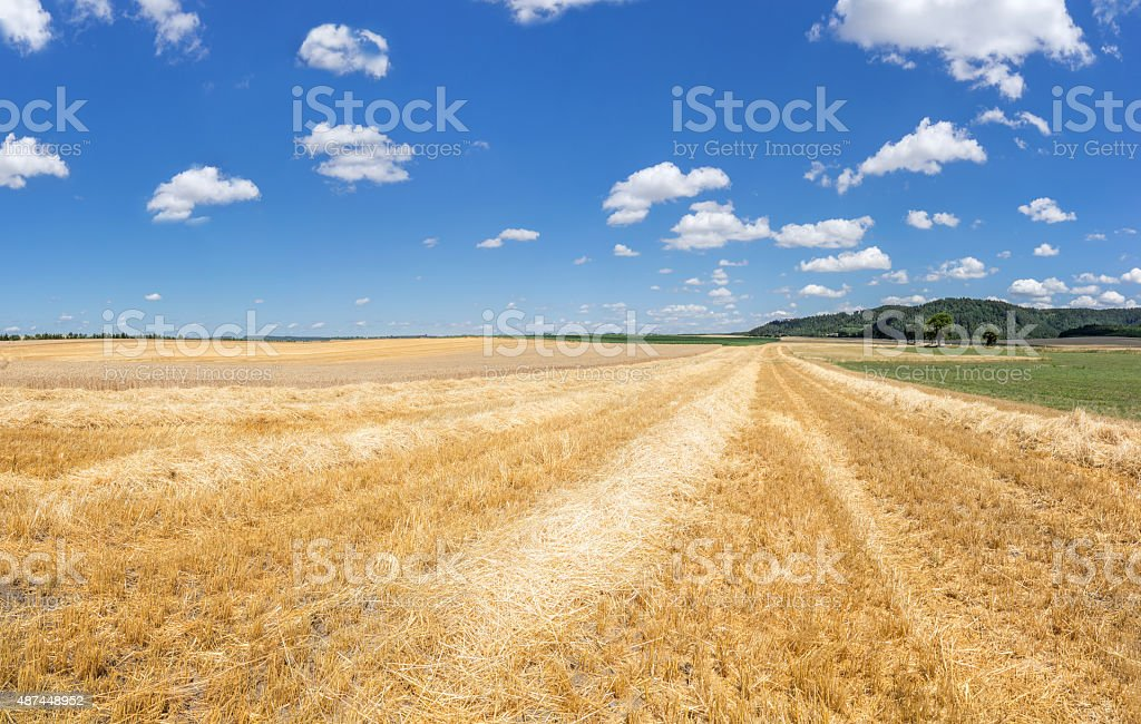 Stubble field with rows of straw stock photo