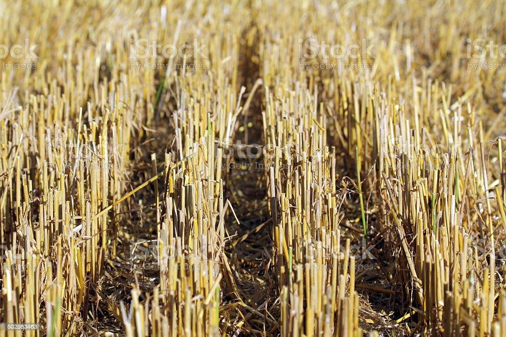 stubblefield stock photo