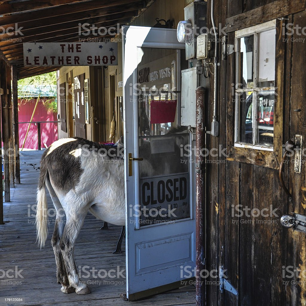 Stubborn Donkey in a Shop Door on Route 66 stock photo
