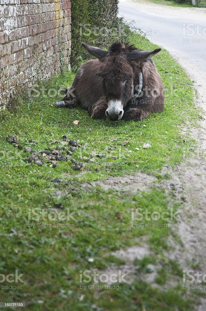 stubborn donkey lying down on the grass stock photo