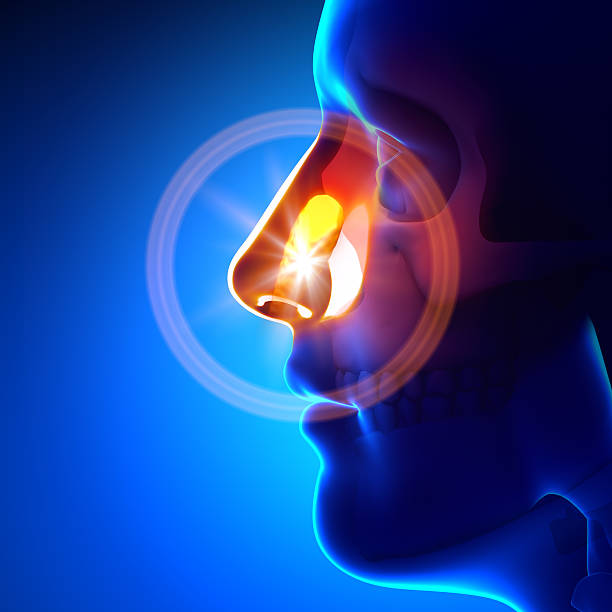 Stuck object in nose Stuck object in nose human nose stock pictures, royalty-free photos & images