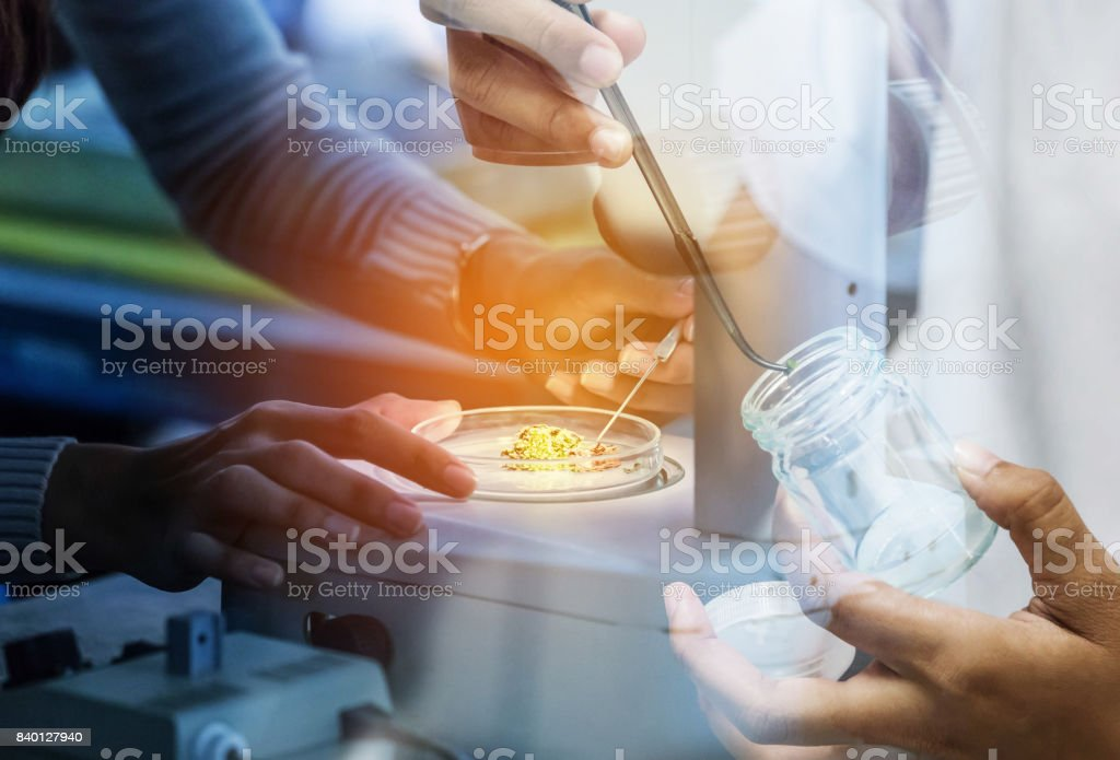 student girl researsh in science laboratory experiments with biotechnology girl using forceps for small pieces plant tissue culture in bottle at laboratory stock photo