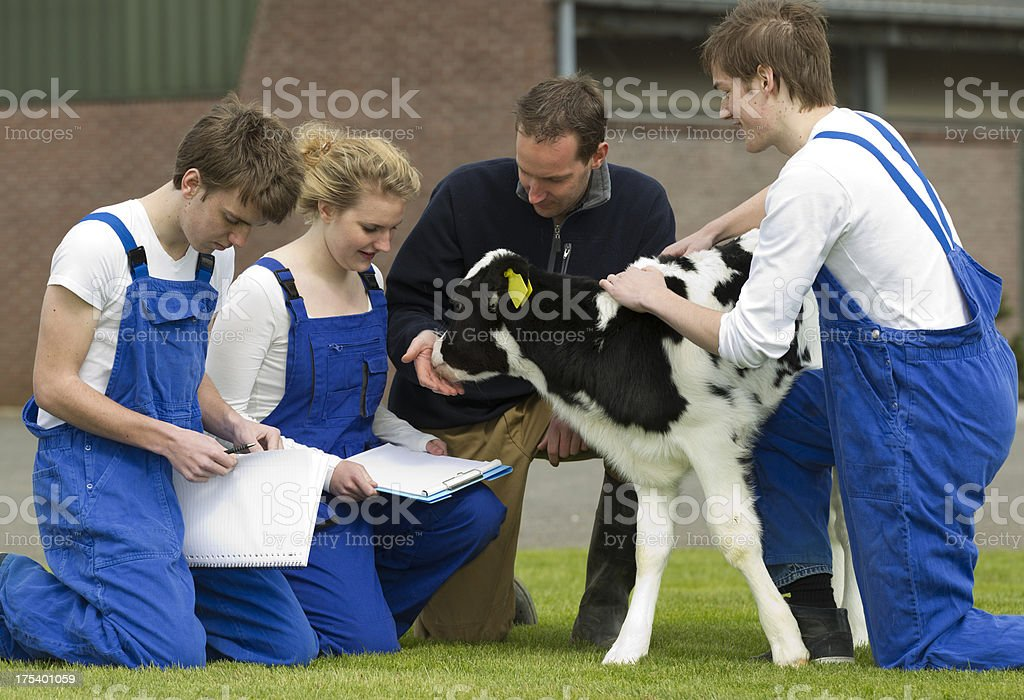 Student learn about cows from an experienced instructor. royalty-free stock photo