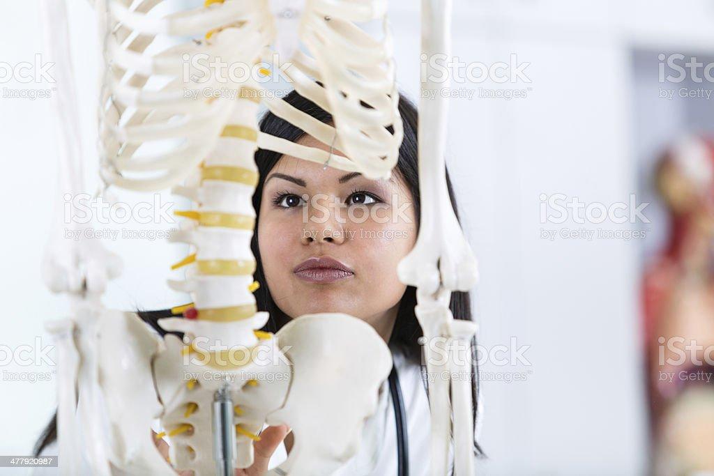 Student looking at human skeleton royalty-free stock photo