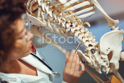 istock Student looking at human skeleton 872160234