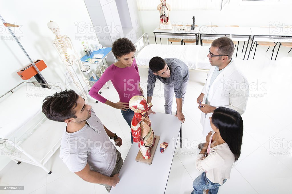 Students and teacher on anatomy class royalty-free stock photo