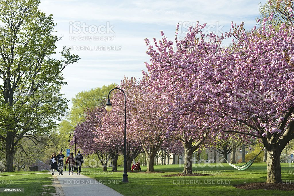 Students in Bryn Mawr College royalty-free stock photo