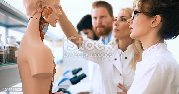 istock Students of medicine examining anatomical model in classroom 1049914036