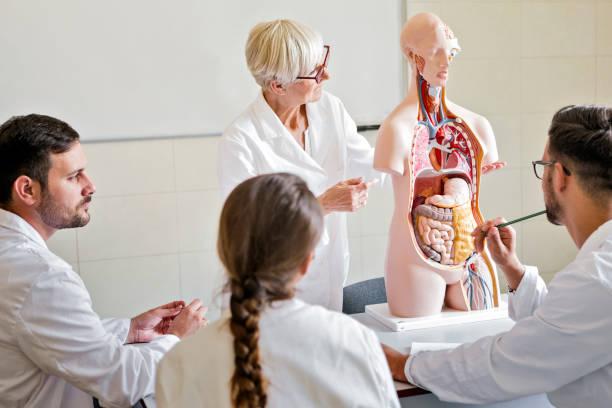 Medizinstudenten untersuchen anatomisches Modell mit Doktorprofessor – Foto