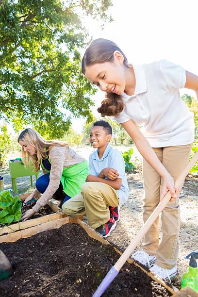 alunos trabalhando no jardim vegetais durante a viagem de campo na exploração - teacher school solo imagens e fotografias de stock