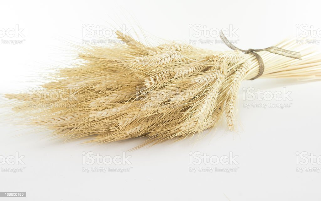 Studio Close Up Wheat Stalks royalty-free stock photo