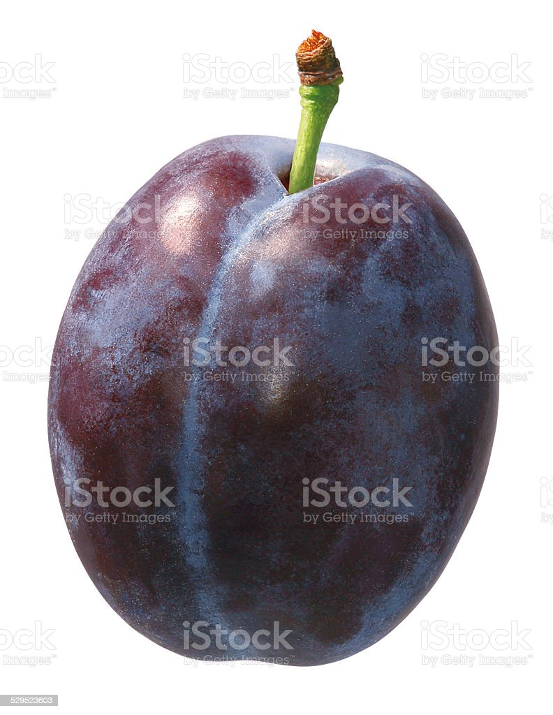 studio isolated prune stock photo