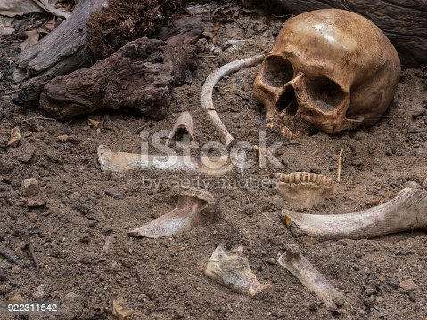 istock Studio setup still life of archaeological excavation with skull, bones still half buried in the ground at the ancient grave 922311542