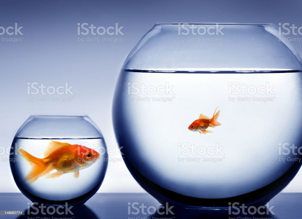 Studio shot of a fish in bowl stock photo