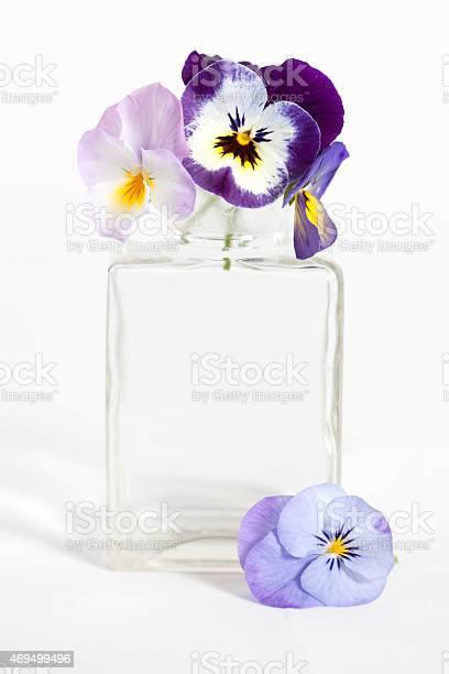 Studio shot of blue colored pansy flower in the phial picture id469499496?b=1&k=6&m=469499496&s=612x612&h=rvdhrjf3x w3zbmd1rbrbsc366u6bcj jhbfwufy93o=