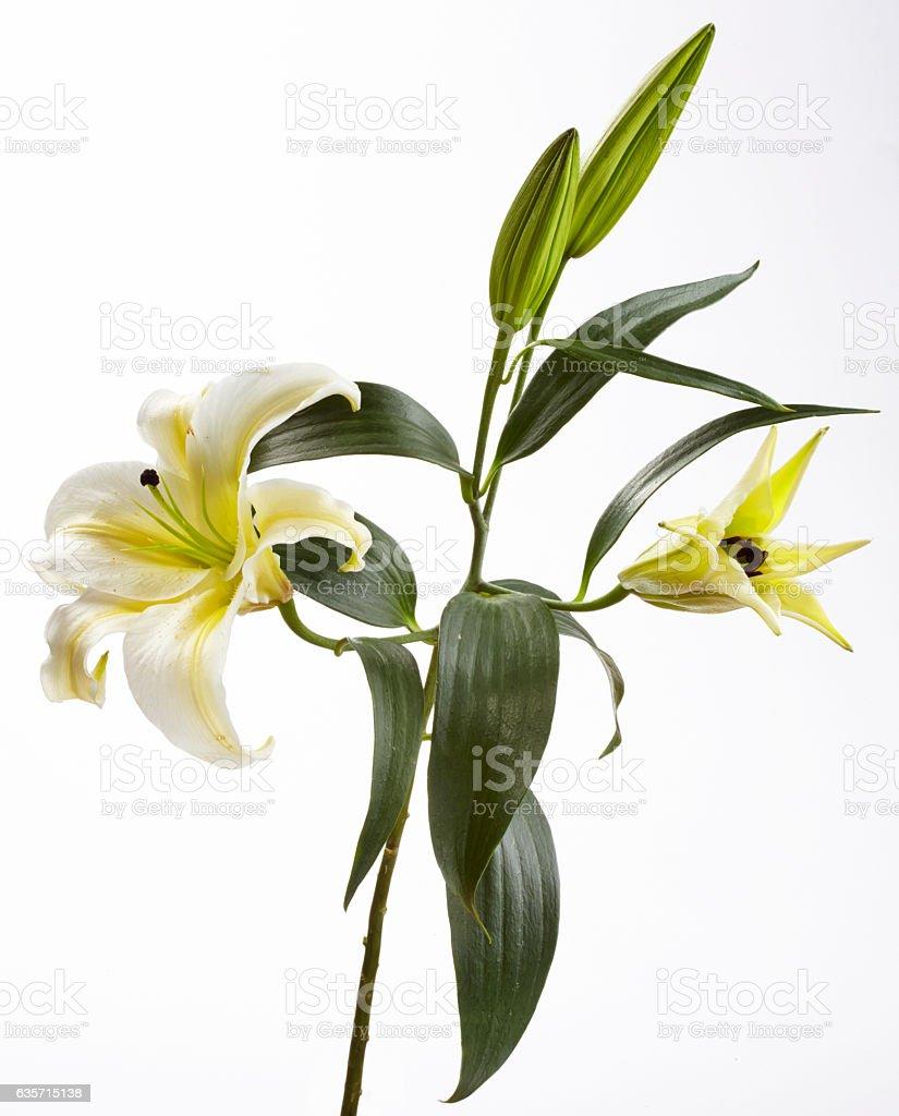 Studio Shot of Flowers royalty-free stock photo