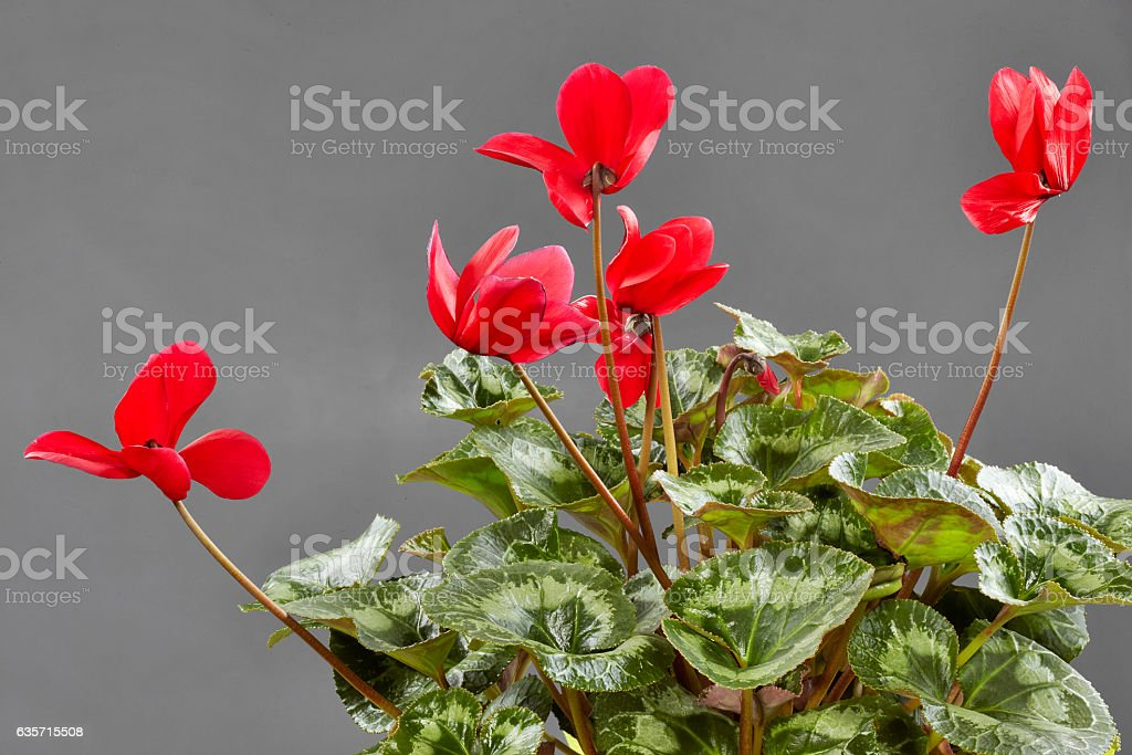 Studio Shot of Flowers royalty-free stock photo
