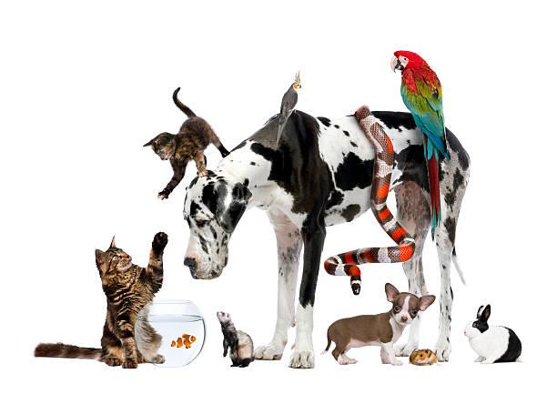 Studio shot of large group of different pets picture id106396236?b=1&k=6&m=106396236&s=612x612&w=0&h=r9vbupigpyntcsvurbbyzdl657y hpw3i3 g3nfz7ry=