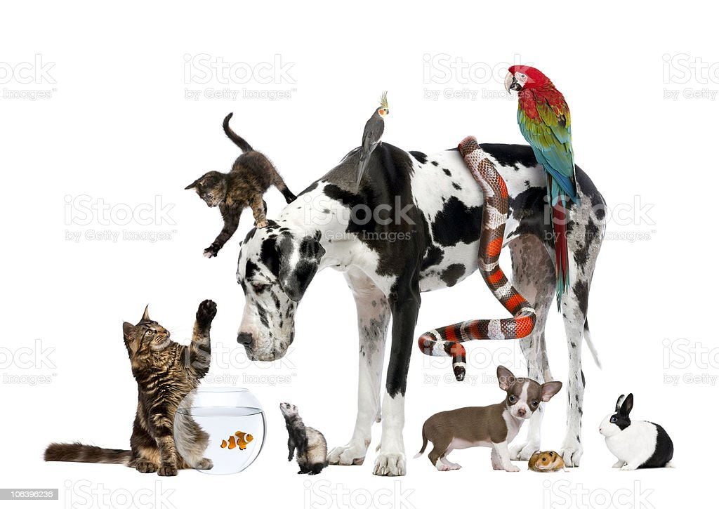 Studio shot of large group of different pets stock photo