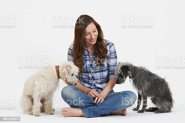 Studio shot of woman with two pet lurcher dogs picture id482230874?b=1&k=6&m=482230874&s=612x612&h=mn3ory2scuhgbwf8izlwijs6syovhknhqsmttvmys30=