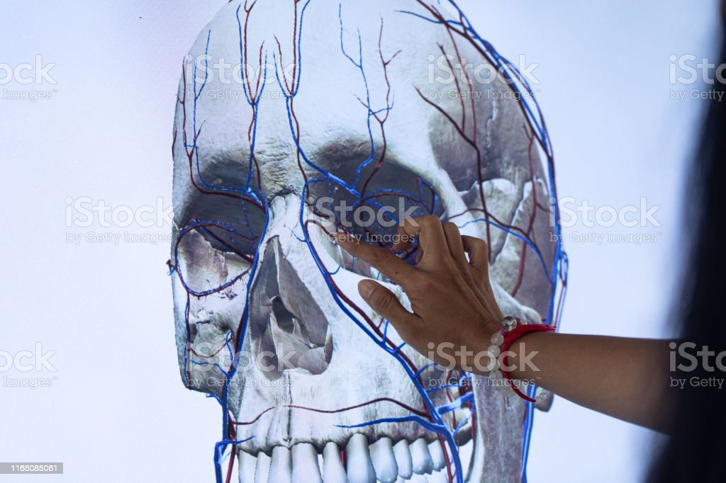Study anatomy Human and Histological sample of Human model in the...